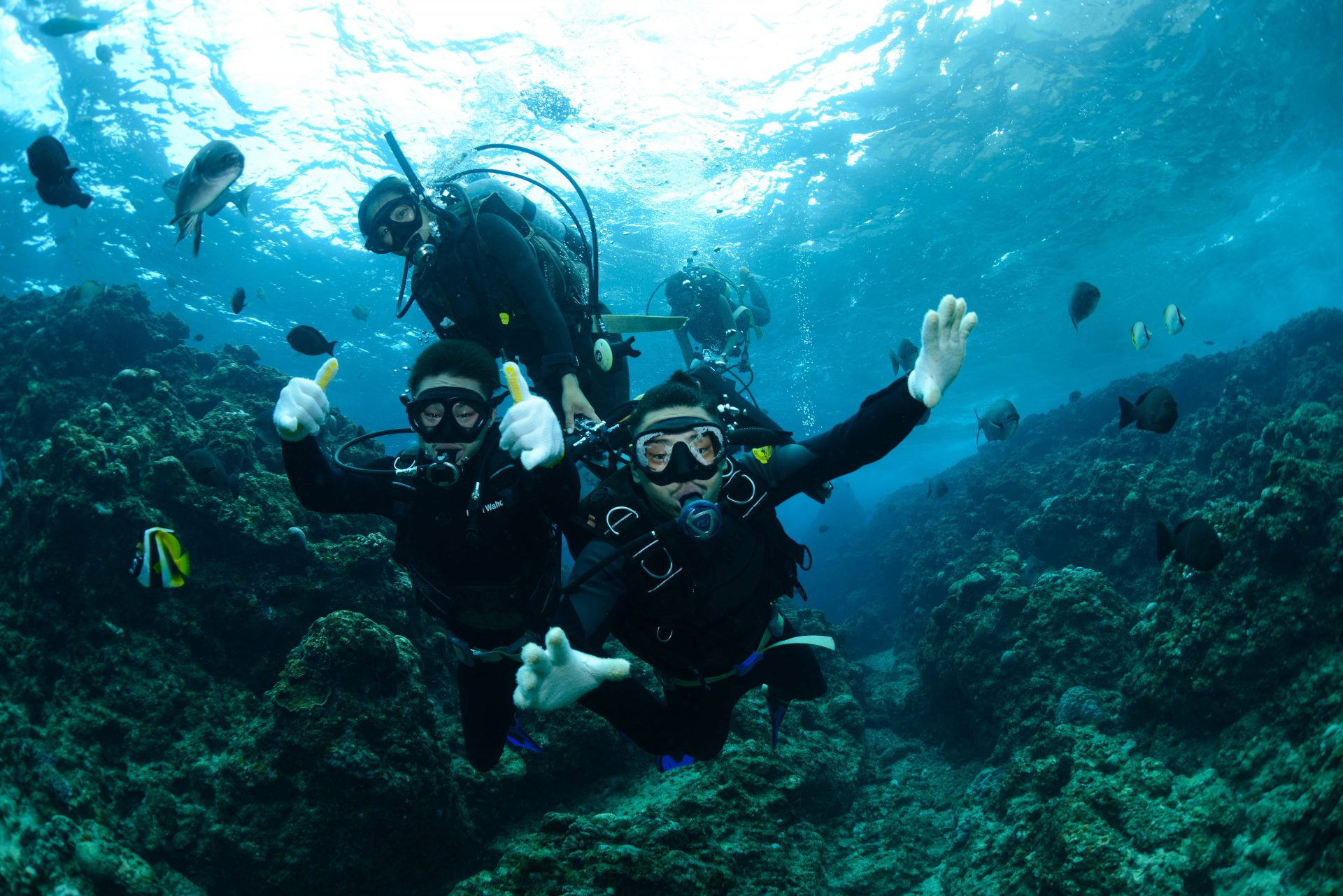 divers in the ocean