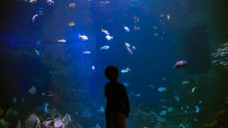 Young boy at the national marine aquarium