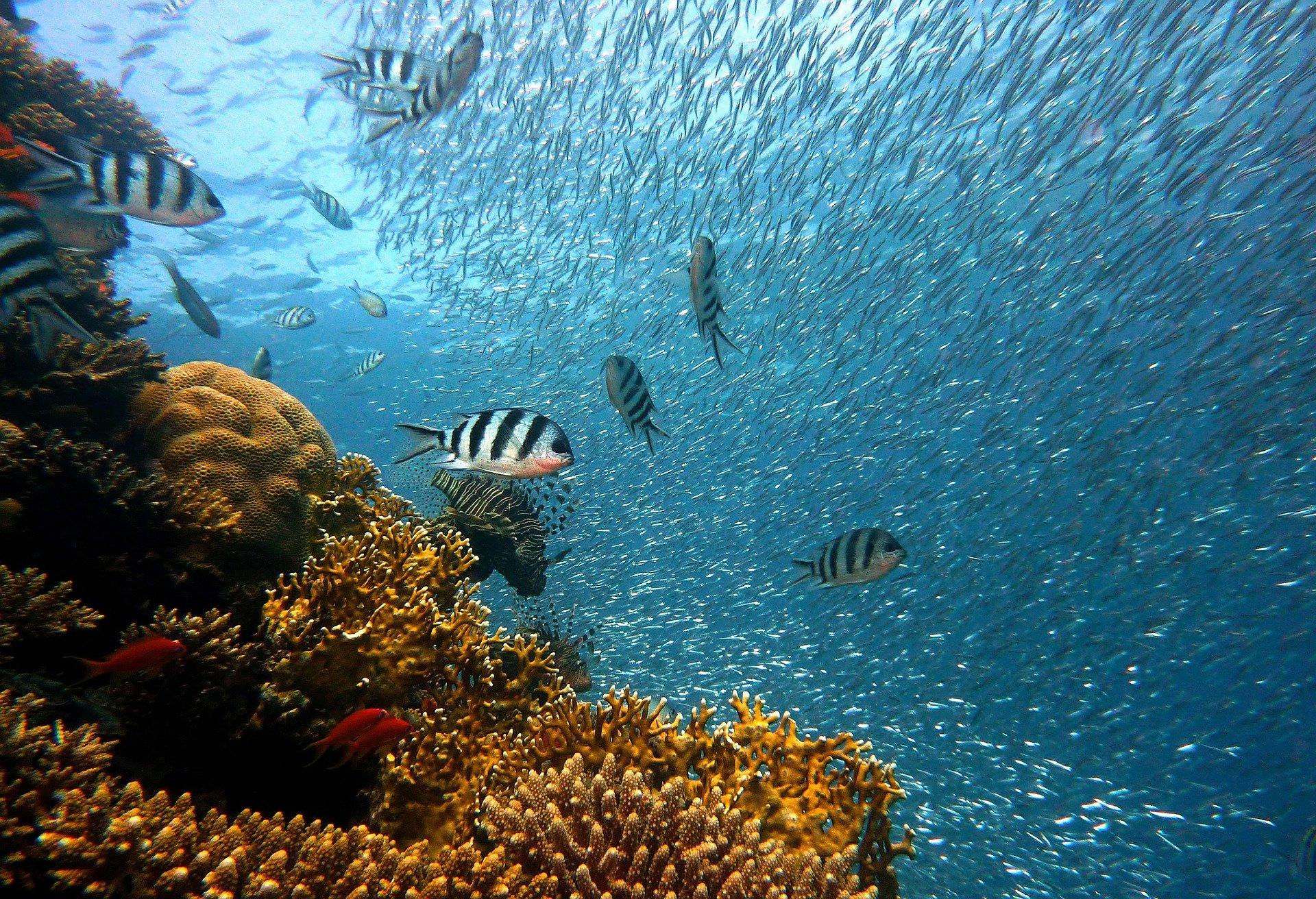 coral reef image