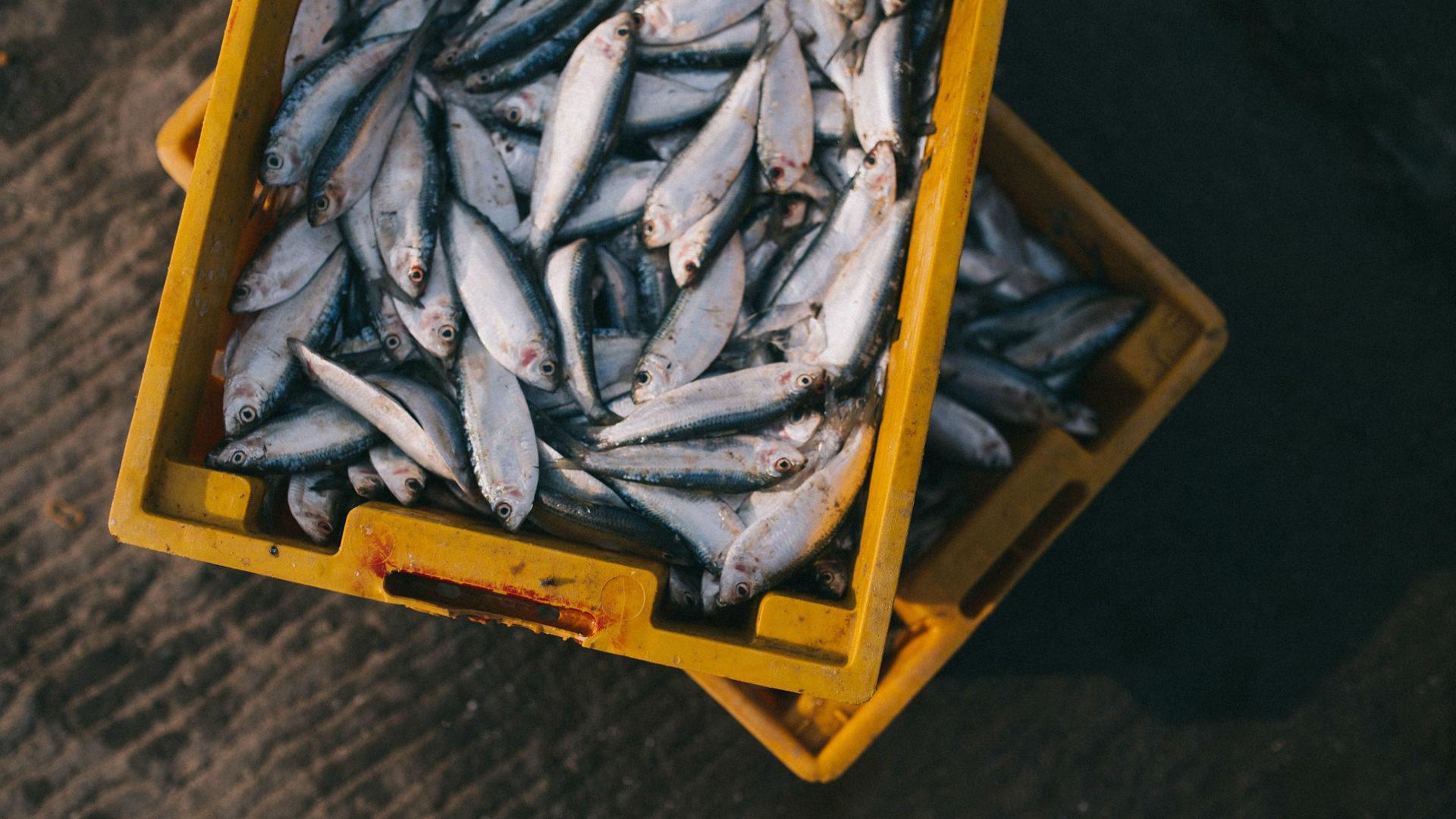 Suatainable fishing