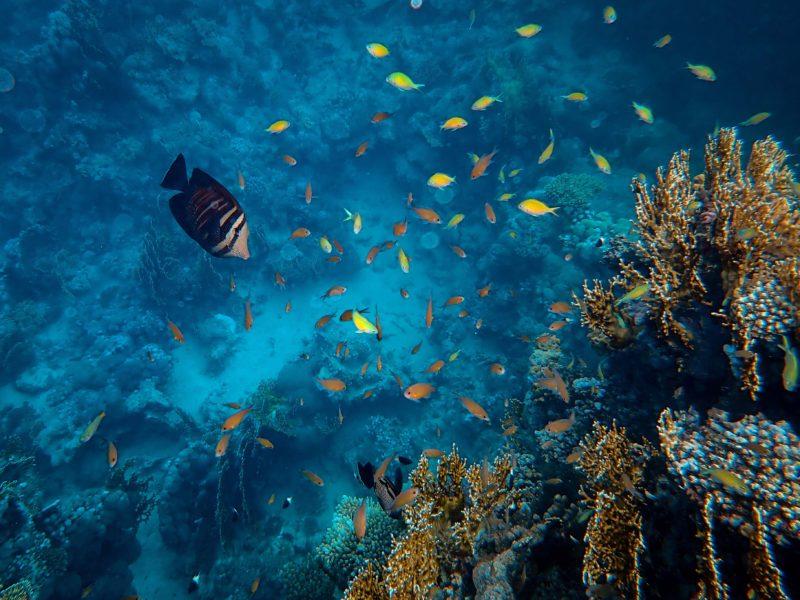 ocean-diving