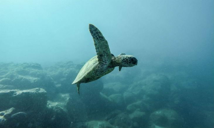 Sea-turtle-Ocean
