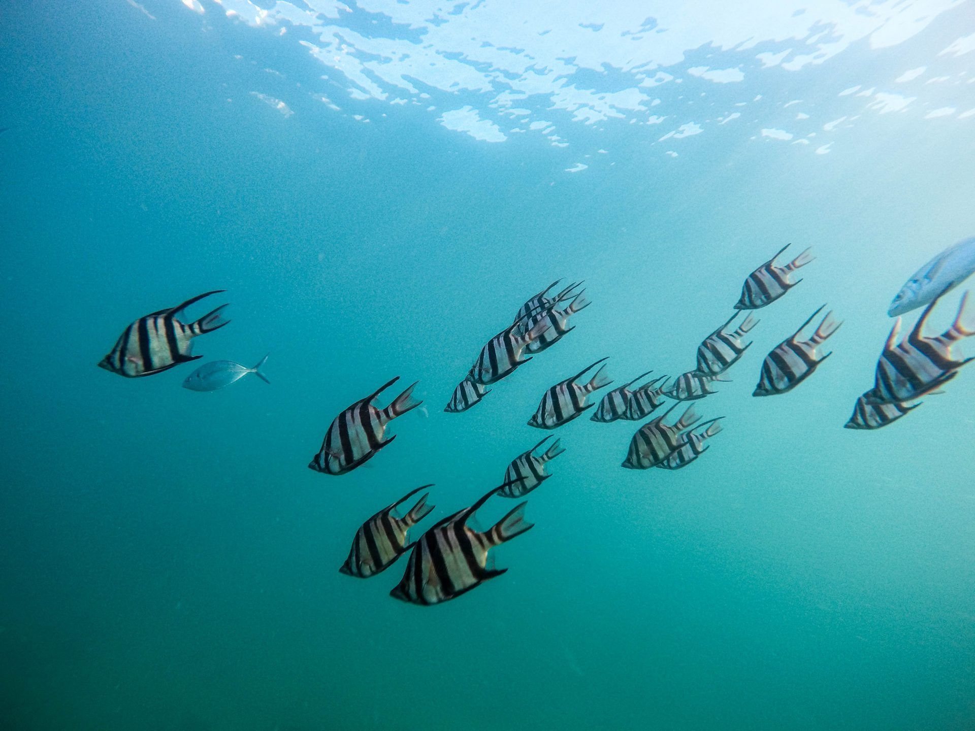 fish swimming in the ocean