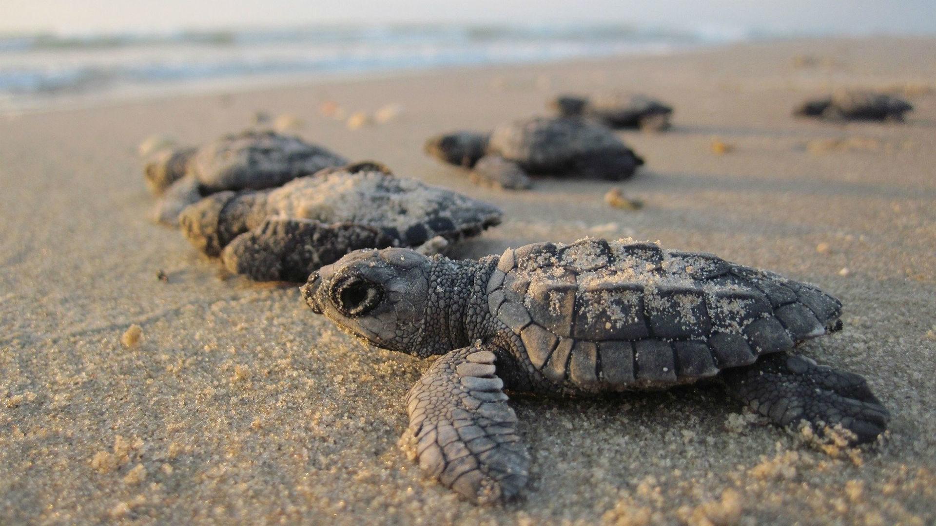 sea-turtles