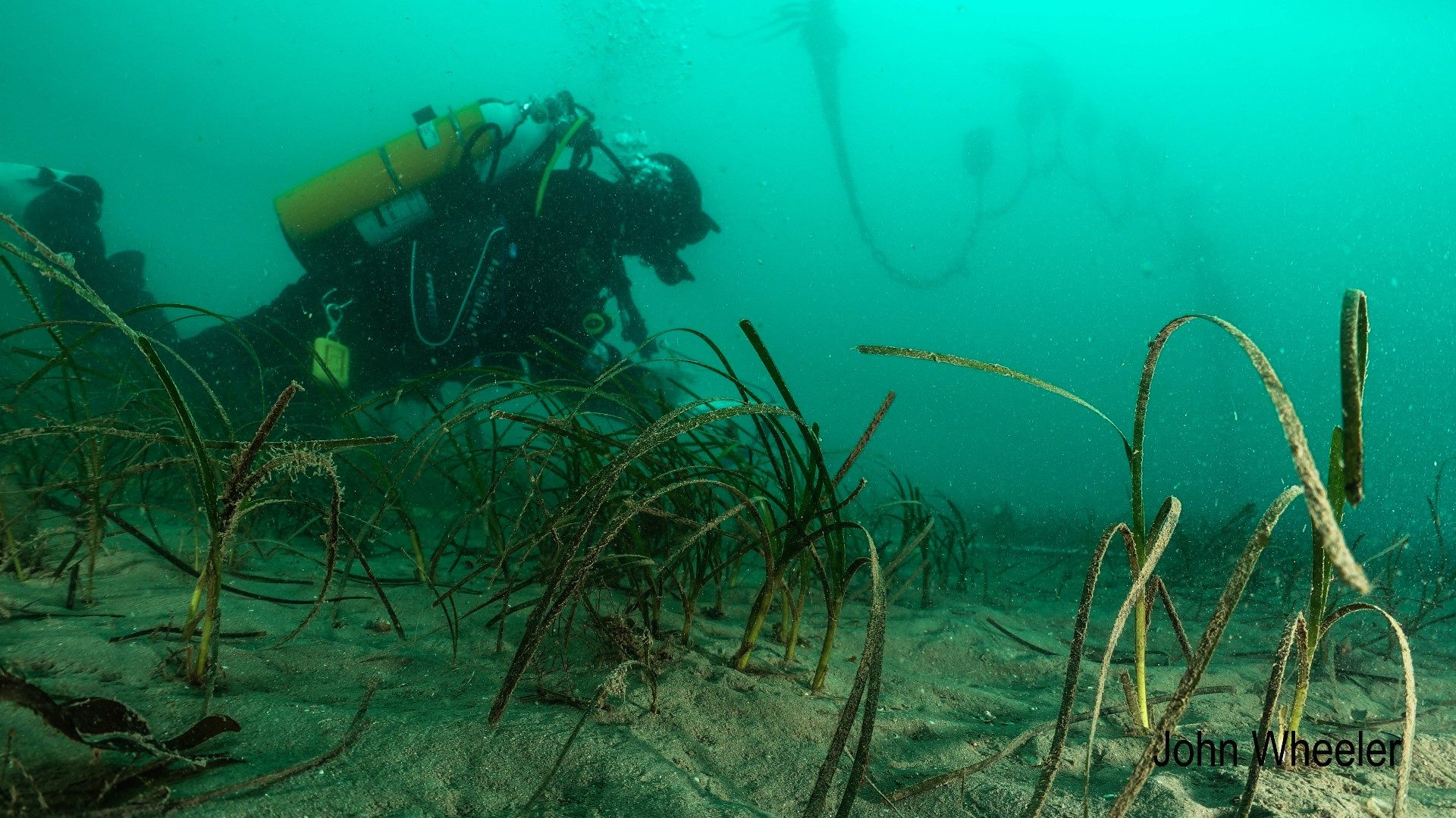 seagrass-blog